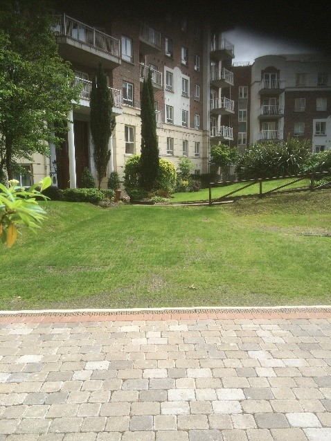 Grass Paving 1